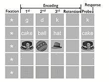 Sternberg Intelligence Triarchic Theory Of Intelligence Wikipedia
