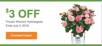 the home depot garden club s save 3 00 off proven winners hydrangeas
