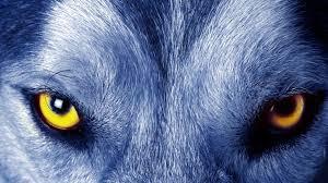 Free download Soul of wolf 4K Ultra HD ...