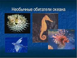 Животное океана Животный мир Мирового океана Реферат на тему животные океана