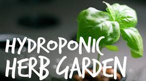hydroponic herb garden guide