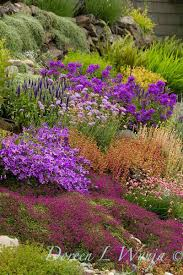 Small Picture 64 best Alpine Rock Gardens images on Pinterest Plants