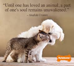 Pet Love Quotes