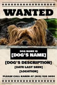 Lost Pet Flyer Maker Pets Flyer Templates PosterMyWall 74