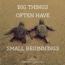 Turtle Quotes Small Beginnings Big Things Motivation turtles quotes wellness 1