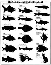 Details About Fish Identification Chart Glossy Poster Picture Photo Funny Cat Fishing Lol 1060