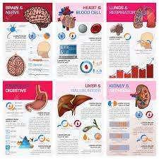 Internal Human Organ Health And Medical Chart Diagram Infographic