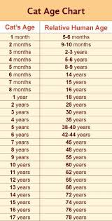 Cat Years Chart Calculator This Helped Ive Been Trying To Figure This Out For Years