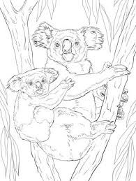 Small Picture 11 best Sassafras Zoology images on Pinterest Zoology Drawings
