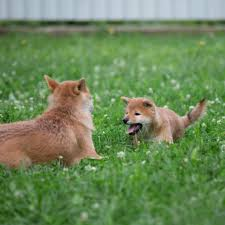 Как выбрать <b>корм</b> для активной собаки — советы в Журнале ...