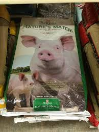 Mazuri Mini Pig Feeding Chart Mini Pig Nutrition Are You Feeding Your Pig Right Mini