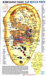 Acupuncture Auricular Points Chart Acupressure Acupuncture Sujok Spinal Segments Ear Charts