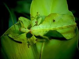 Bildergebnis für insekt grün