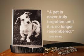 80 Dog Quotes Captions And Messages Shutterfly