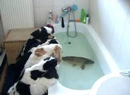 pet bathtub dog bathtub best of pet bathtub for funny dog pet bathtub for dogs pet bathtub