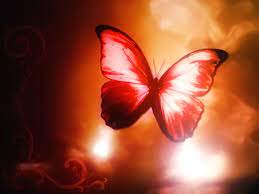 Red Butterfly HD Wallpapers - Wallpaper ...