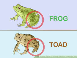 3 Ways To Tell The Difference Between A Frog And A Toad