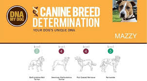 Dog Dna Chart Best Dog Dna Tests Compared My Family Dna Test