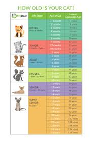 Dog To Human Years Conversion Chart Cat Years Calculator Cats Age To Human Years Petcare