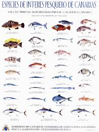 Lanzarote Fish Chart Fishing Chaters In Tenerife The Crested Wave Best Months