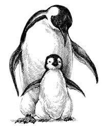 baby penguin drawing. Contemporary Baby Penguins Family Cute Baby Penguin And Parent Drawing Isolated Stock Vector   69726031 And Baby Penguin Drawing N