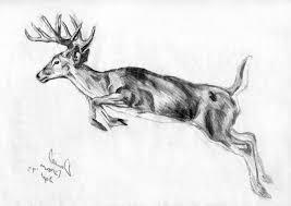 Pencil Drawing Deer Rome Fontanacountryinn Com