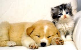 dogs and cats wallpaper. Fine Wallpaper Dog And Cat Wallpaper  Teddybear64 16834781 Fanpop Inside Dogs And Cats Cave