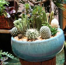 Small Picture Dish Garden Containers Gardening Ideas