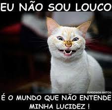 dopl3r.com - Memes - EU NAO SOU LOUco CURIOSOS GATOS É O MUNDO QUE NÃO  ENTENDE MINHA LUCIDEZ!
