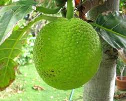 18 Caribbean Fruits To Know And Love  SAVEURJamaican Fruit Trees