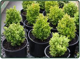 healthy plants in pots tampa fl tree nursery tampa p71
