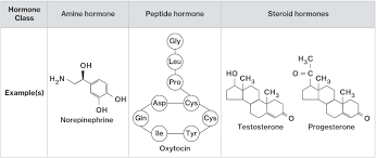 Hormone Classification And Structure Course Hero