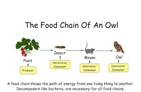 Dramatic Food Chains This fun lesson gives students the chance to ...