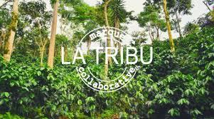 """Résultat de recherche d'images pour """"la tribu epicerie collaborative"""""""
