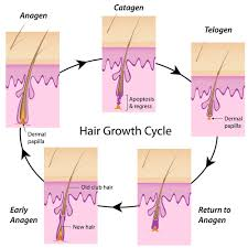 Laser Hair Removal For Different Skin And Hair Types Cameo