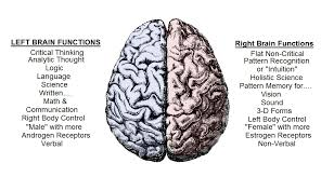 theory on consciousness the source of consciousness human brain left right functions rb male female