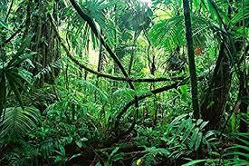 jungle background. Plain Jungle Reptile Habitat Terrarium Background DEEP IN THE JUNGLE  24 Tallu0026quot   To Jungle Background O