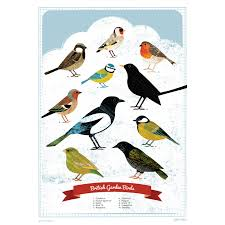 british garden birds poster gifts under 10 posters animal kingdom the red door gallery art prints design s and creative gifts