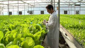 advantages and disadvantages of greenhouse technology to agriculture