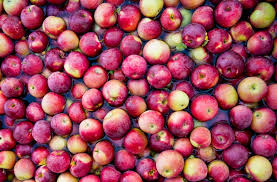 10 Best Apples For Apple Pie New England Today