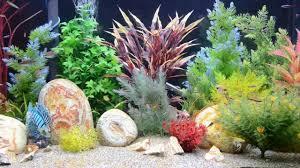 tropical aquarium wallpaper. Interesting Aquarium Intended Tropical Aquarium Wallpaper S
