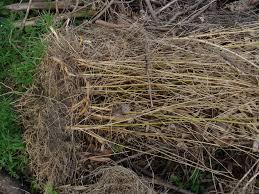 Steve S Garden Bamboo Removal Made Easy Backyard Pinterest