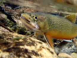 fly fishing wallpapers picture