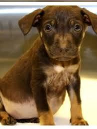 Spca Again Warns Public Of Purchasing Pets On Craigslist Woai
