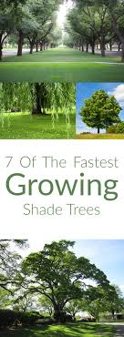 Best 25+ Fast growing shade trees ideas on Pinterest | Fast growing, Shade  trees and Trees to plant