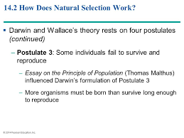principles of evolution ppt  14 2 how does natural selection work
