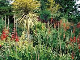 mediterranean plants to grow in your