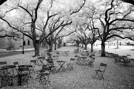 rice university campus trees. Rice University Infrared Photo By Ed Zimmeth Throughout Campus Trees