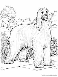 Small Picture dog color pages printable afghan hound dog coloring pages 001