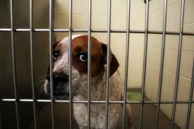 animal shelters sad. Interesting Sad 72 Hours To Euthanization With Animal Shelters Sad E
